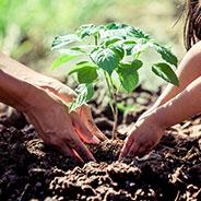 Fall Planting
